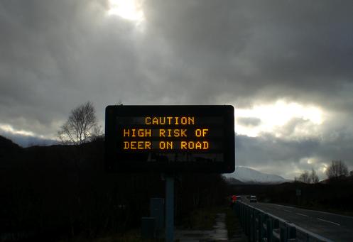 Perigo. Risco elevado de cervos na estrada